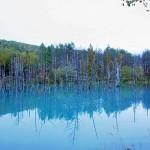 北海道美瑛の青い池は本当に青くきれいだった。