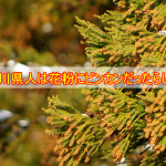 石川県民は、どうやら花粉に日本一ビンカンだったらしい。どうりでマスク姿の人がやたら多いと思っていた。