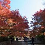 京都・真如堂の紅葉と三重塔がステキ。