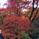 京都嵯峨野宝筐院。見事な紅葉を静かにしっとりと堪能できる名所です。