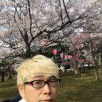 [地元ネタ] 2017年、小松市のきれいなさくらまとめ。